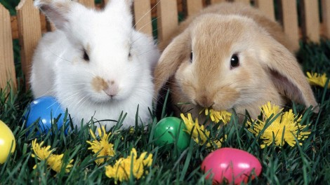 Easter-Bunny-2013-Pictures-Background-HD-Wallpaper
